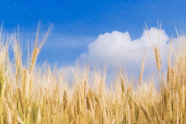 スルスルこうそに小麦ふすま配合